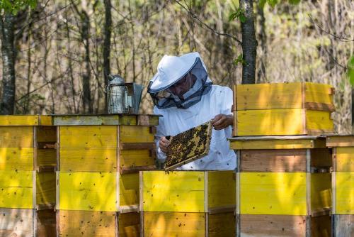 Bienen 06