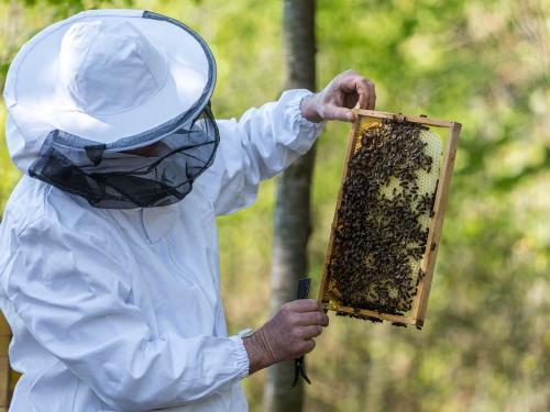 Bienen 13