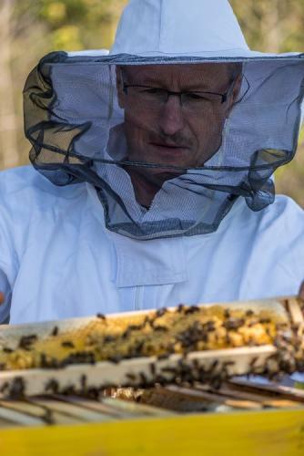 Bienen 17