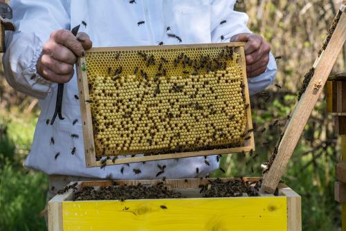 Bienen 19