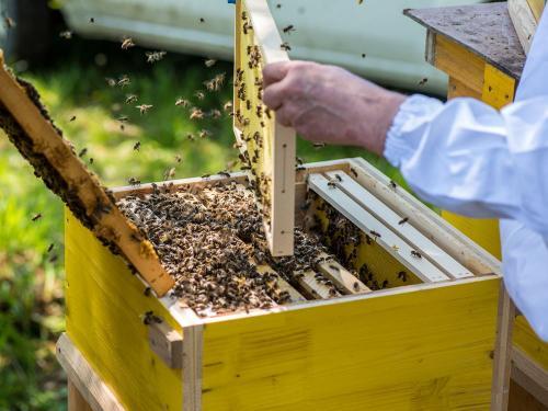 Bienen 35