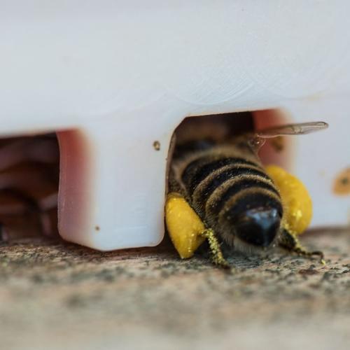 Bienen 41