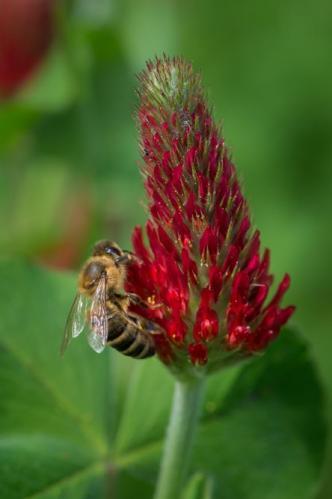 Bienen12