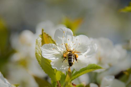 Bienen3